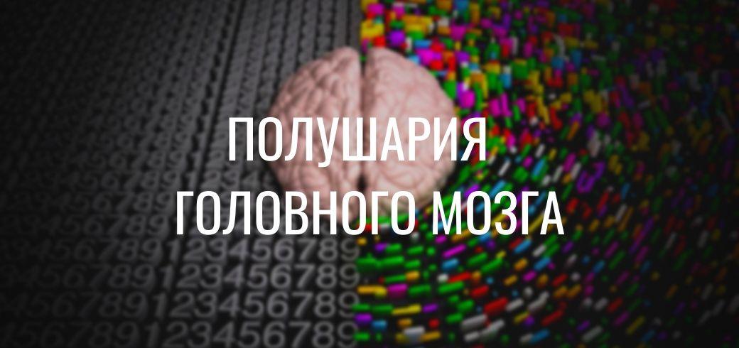 За что отвечает правое полушарие мозга и левое: тестируем и развиваем